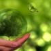 El Miteco lanza nuevas líneas de ayudas en materia de biodiversidad y renaturalización urbana