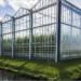 Iluminación natural para invernaderos sostenibles y eficientes con el vidrio Fountain de AGC